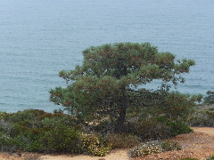 Torry pines 7-17-2011